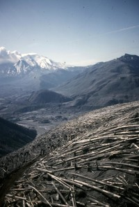 Timber blown down atop ridge, looking toward the mountain.