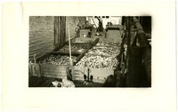 Six large holding bins full of salmon on deck of fishing boat moored at cannery dock