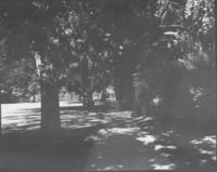 1948 Memory Walk