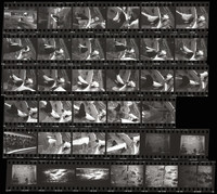 1968 Orca Whale in captivity at Stanley Park (Contact Sheet)