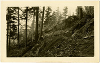 Chuckanut Drive construction - forested hillside with large rock blocking path
