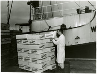 A man in a lab coat inspects a box  on top of a pallet of boxes of frozen crab