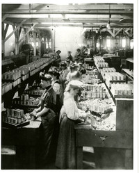 Fish cannery scene with women standing back to back in two rows, stuffing cans with fish