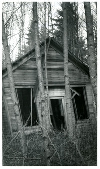 South Bay School, Lake Whatcom - Exterior of small, abandoned building surrounded by overgrown brush, saplings
