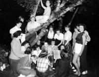 Bun Club gathering in a tree