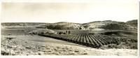 Boston-Okanogan Apple Co. - Lower Camp