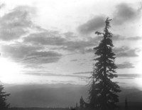 View at sunset or sunrise across forest to unidentified mountain range, large tree in right foreground.