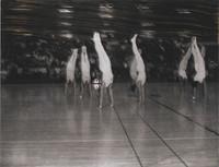 1967 Danish Gymnastic Team