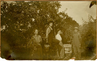 Two women, a man, and a boy on a ladder holding a bucket of apples, in an orchard