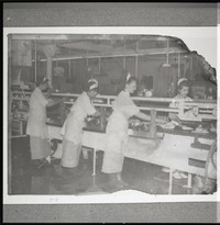 Five unidentified women on fish canning line (possibly Bornstein Seafoods)