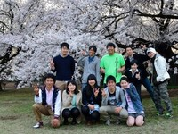 Cherry Blossoms and Peace Signs - Japan