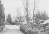 1950 Library: View From Steps