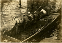 Row of men pull fishtrap net into barge