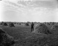 A man in overalls standing in a field among haystacks