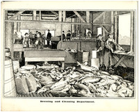 Drawing of interior of salmon cleaning and butchering operation with salmon covering floor