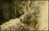 Three hikers pose on a trail traversing a forested slope