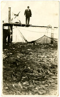 Port Moller fish trap