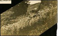 Woman in a hat, holding a walking stick, sits on a hillside covered in wildflowers