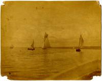 Several small sailboats on a bay