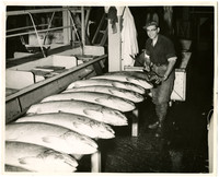 Max Haube - cannery worker holding large knife poses with several salmon displayed on cutting board