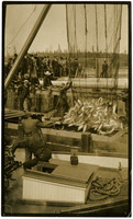 Two workers brailing salmon into holding scow