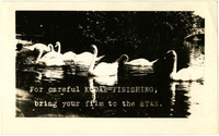 Several swans on a pond