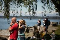 Orcas in Bellingham Bay 5-26-20