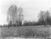 Unidentified field near a forest.
