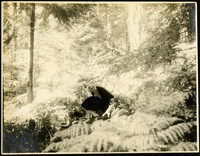 Bright, sunlit image of forest with ferns