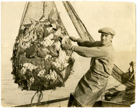 A man holds onto a net full of fish as it hangs above deck of boat