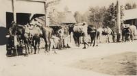 Saddled Horses