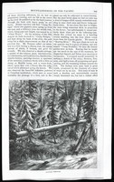 Mountaineering on the Pacific (copy of article from Harper's New Monthly Magazine, vol. 39, Nov. 1869), page 7
