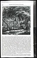 Mountaineering on the Pacific (copy of article from Harper's New Monthly Magazine, vol. 39, Nov. 1869), page 6