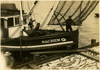 Crew of workers disengage barge from fishtrap with tender in background