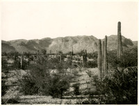 Desert scene with scattered saguaro cacti and moutains in the distance