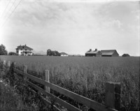 Large, three-story farmhouse, outbuildings, and barns seen at medium distance from fenceline and across field