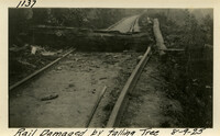 Lower Baker River dam construction 1925-08-09 Rail Damaged by Falling Tree