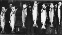 Seven dead salmon hanging from a rope