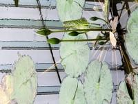 Japan: Botanical Gardens
