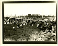 Corral with cattle and several cowhands, and wooden bridge traversing the lot