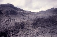 Remains of timber destroyed in blast.