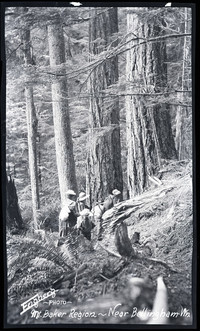 A small group of hikers move among tall trees in forest near Mt. Baker