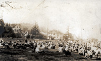 Student Gathering on the Main Lawn