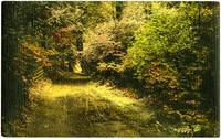 Lane through forest