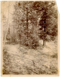 Small clearing or lane in wooded area with tire tracks in foreground