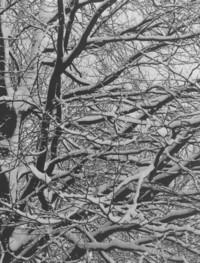 1971 Snowstorm