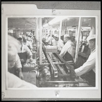 Fish processing workers (probably Bornstein Seafoods)