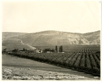 Boston-Okanogan Apple Company - view of orchards in valley