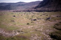 View of the foot of the North Fork Toutle River debris flow, with grass sprouting after reseeding. Dead standing timber, burned in the eruption, visible in background.
