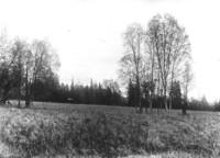 Unidentified field near a forest